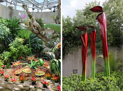The sundew (L) and trumpet plants (R) that were part of the special exhibit Savage Gardens in 2013.