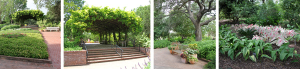 The Wisteria Arbor from a distance (L), the Wisteria Arbor (LC), tall tree (RC) and caladiums in shade garden (R).