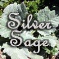 Silver Sage, Salvia argentea Title Image
