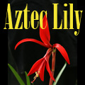 Lily Imposters – Grasp Gardener Program