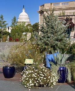 The U.S. Botanic Garden, In The Shadow Of The U.S. Capitol.