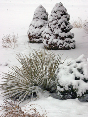 Evaluate your landscapes structure for its interest in winter.