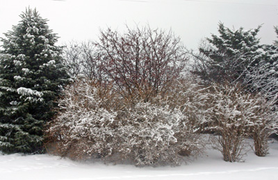 Winter is the best time to prune most trees and shrubs.
