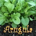 Arugula Title Image