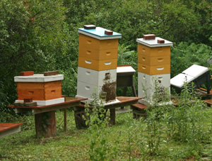 Colony collapse disorder has affected many beekeepers.