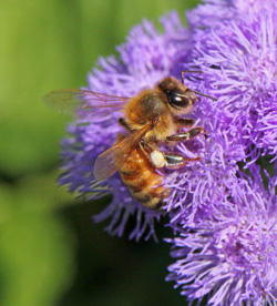 Bees are very sensitive to pesticides.