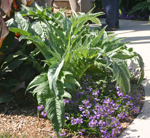 Cardoon offers upright form and bold texture.