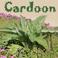 Cardoon, Cynara cardunculus Title Image
