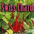 Swiss Chard Title Image
