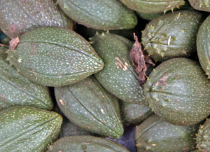 Tacaco, Sechium tacaco, fruits for sale in a Costa