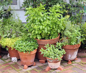Fresh herbs are easily dried to use later.