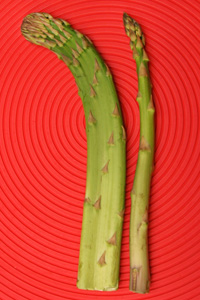 Fasciated (L) and normal (R) asparagus spears.