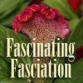 Fascinating Fasciation Title Image