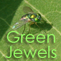 Little Green Jewels Title Image
