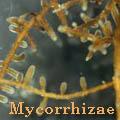 Mycorrhizae Title Image