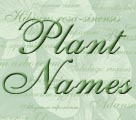 What's In A Name? Understanding Botanical or Latin Names Title Image