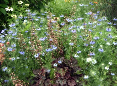 Love-in-a-mist is good addition to the informal garden.