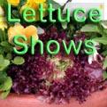 Lettuce Shows Title Image