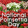 National Poinsettia Day Title Image