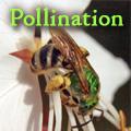 Pollination Title Image