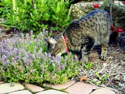Cats have a well-developed sense of smell.