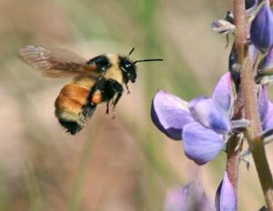 Flower scents help attract pollinators.