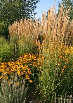 Tall ornamental grasses can provide sound in a garden.