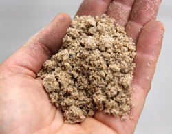 What type of soil do you have in your garden?