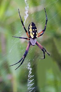 Garden Spiders Master Gardener Program