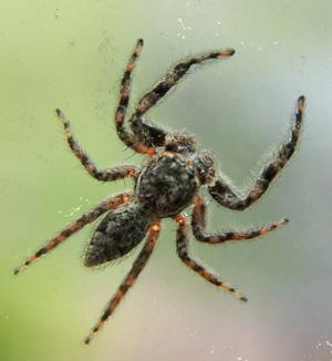 Garden Spiders – Master Gardener Program