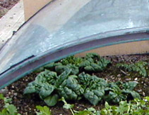 Extend the growing season for spinach with a cold frame.