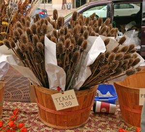Teasel offered as a dried floral component at a Farmers Market.