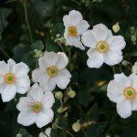 image of plant