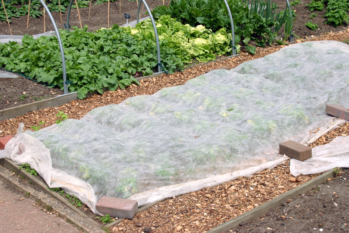 Floating row cover is easy to use in the home garden.