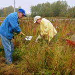 Volunteers managing native plants
