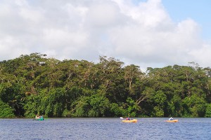 The lowland flooded forest of Tortuguero National Park can only be explored by boat.