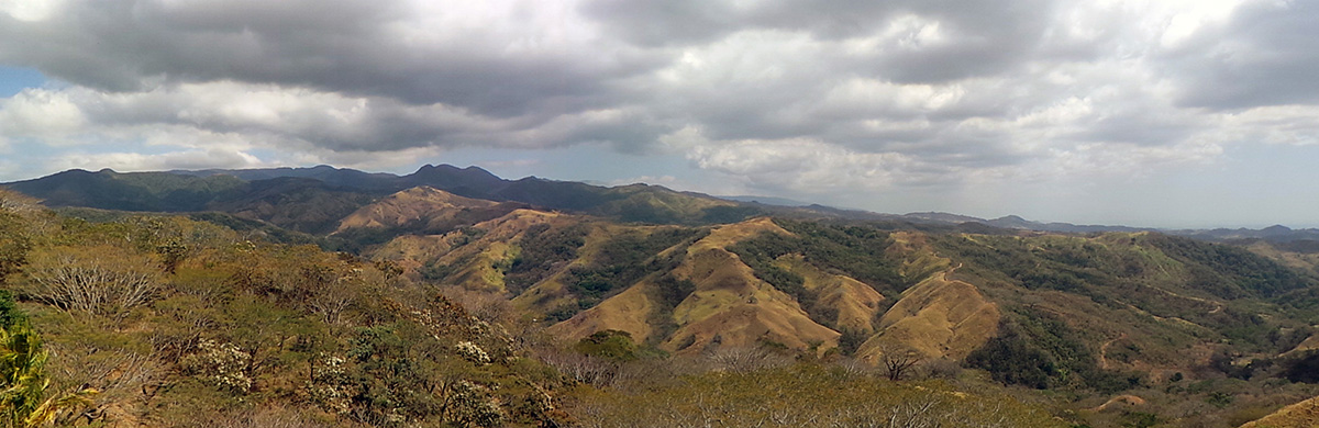 Panoramic view of the tropical dry forest.