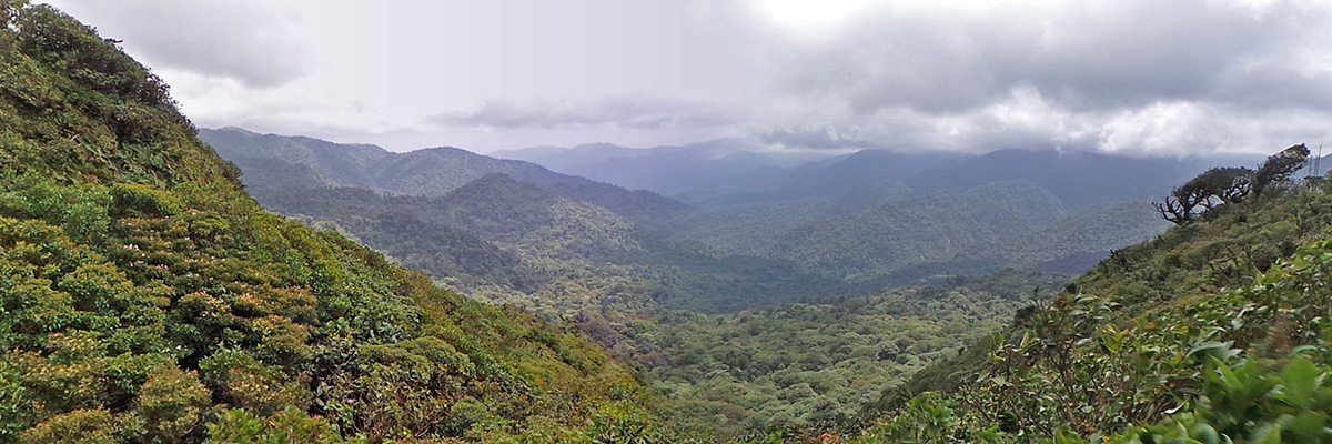 Looking east from the Continental Divide at Monteverde Cloud Forest Biological Preserve.