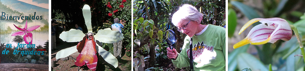 Entrance to Jardin de Orquideas (L), Maureen poses in the big orchid flower (LC),B'Ann inspects a tiny orchid flower (RC), Masdevallia striatella flower (R).