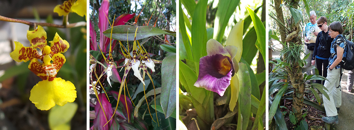 An oncidium flower (RC), Brassia arcuigera (LC), C. discolor (RC), Dan, Kari and Willow look at orchids (R).