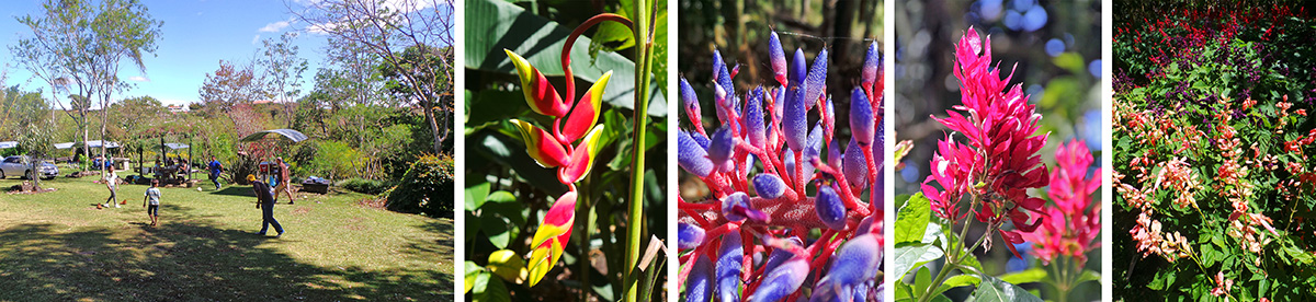 Picnickers in the garden (L), flower of Heliconia rostrata (LC), closeup of bromeliad inflorescence (C), inflorescence of Brazilian red cloak (Megaskepasma erythrochlamys) (RC), and planting of many colors of annual salvias (R).