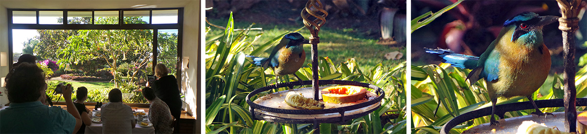 Bird paparazzi (L), the fruit feeder (C), and blue crowned motmot (R).