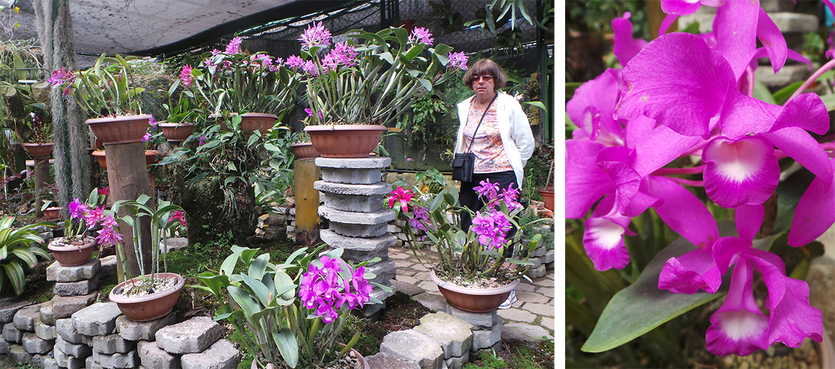 Anne looks at some of the orchids (L), including guaria morada (Guarianthe skinneri) (R).
