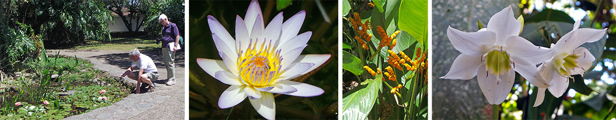 Dan and Jim admire the water lilies (L), closeup of water lily (LC), Stromanthe lutea (RC), Amazon lily, Eucharis grandiflora, flowers (R).