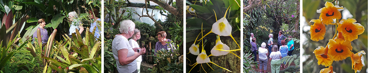 Ileana leads the group through the garden (L), tells Maureen and Carol about some of the miniature orchids (RC), Masdevallia orchid flowers (C), the group in the garden (RC), Dendrobium fimbriatum (R).