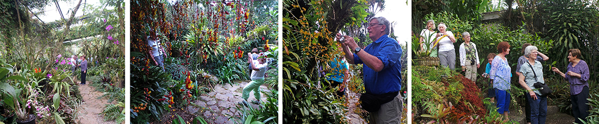 In the large orchid greenhouse (L), Carol photographs Maureen under the hanging flowers of Thunbergia mysorensis (LC), Dan photographs an oncidium orchid (RC), Ileana telling the group about some of the plants in the garden (R).