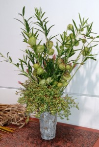 Stems with pods can be cut to use in floral arrangements.