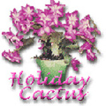 Holiday Cactus Title Image