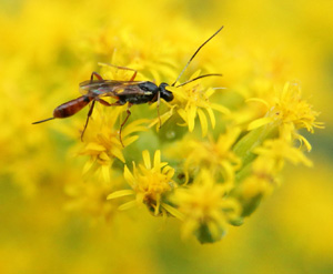 Small insects prefer small flowers.