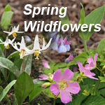SpringWildflowers